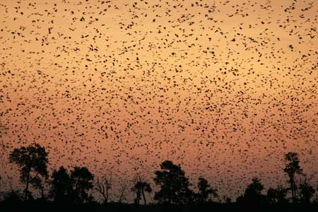 10 Million Bats and A Few Hot Springs